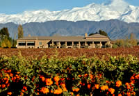Vistalba Winery - Vistalba Vineyards Mendoza